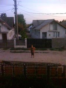 o vecina