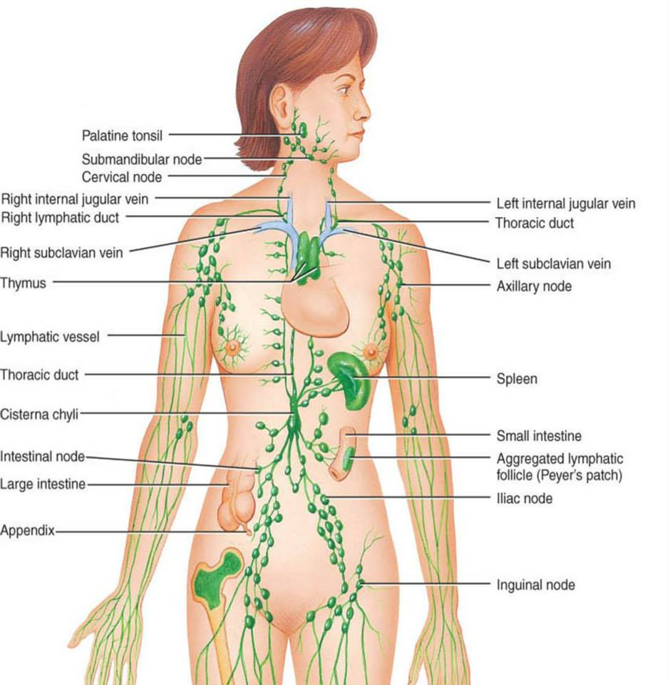detoxifiere ganglioni limfatici)